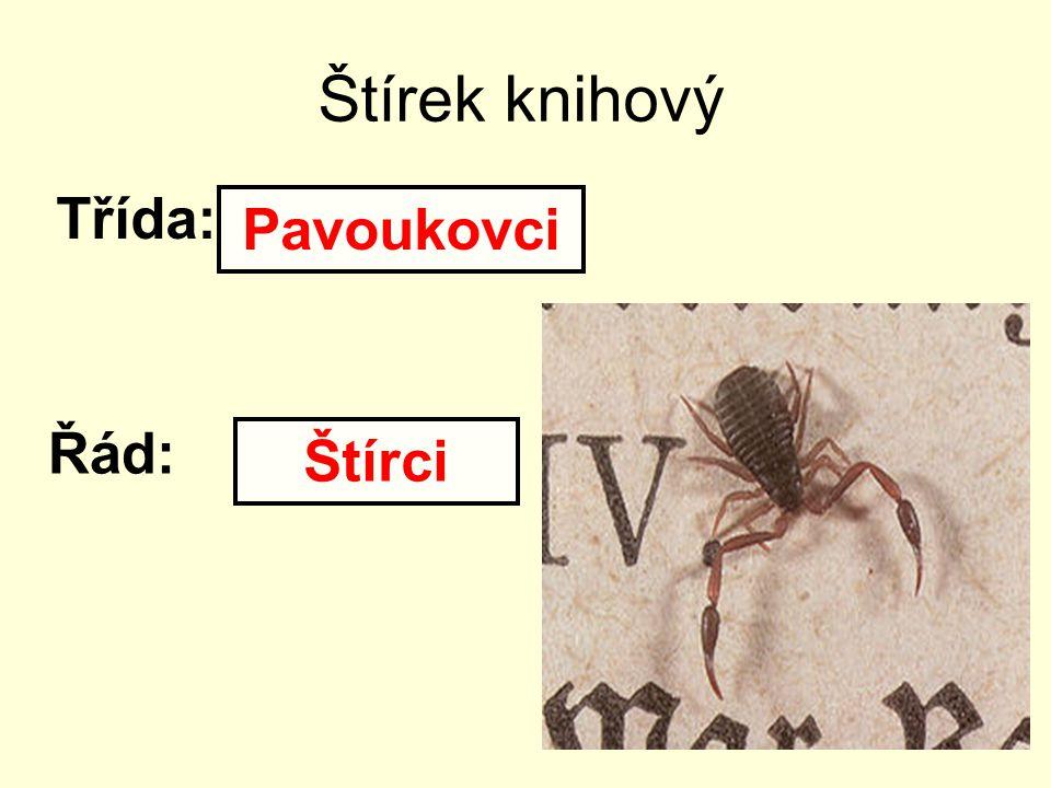 Štírek knihový Třída: Pavoukovci Řád: Štírci