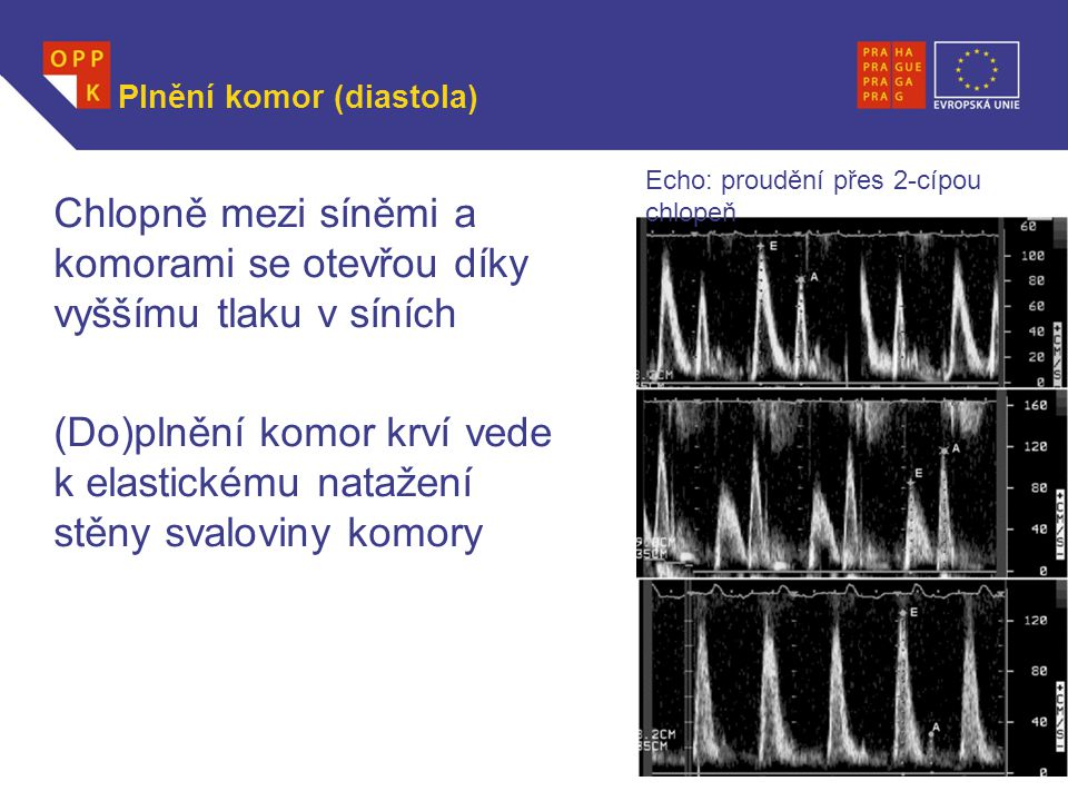 Plnění komor (diastola)