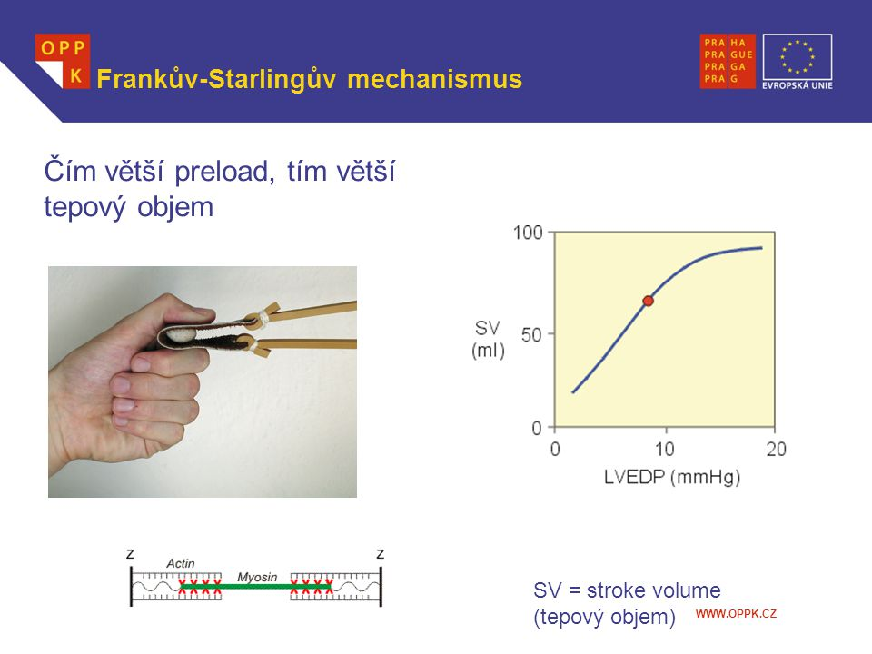Frankův-Starlingův mechanismus