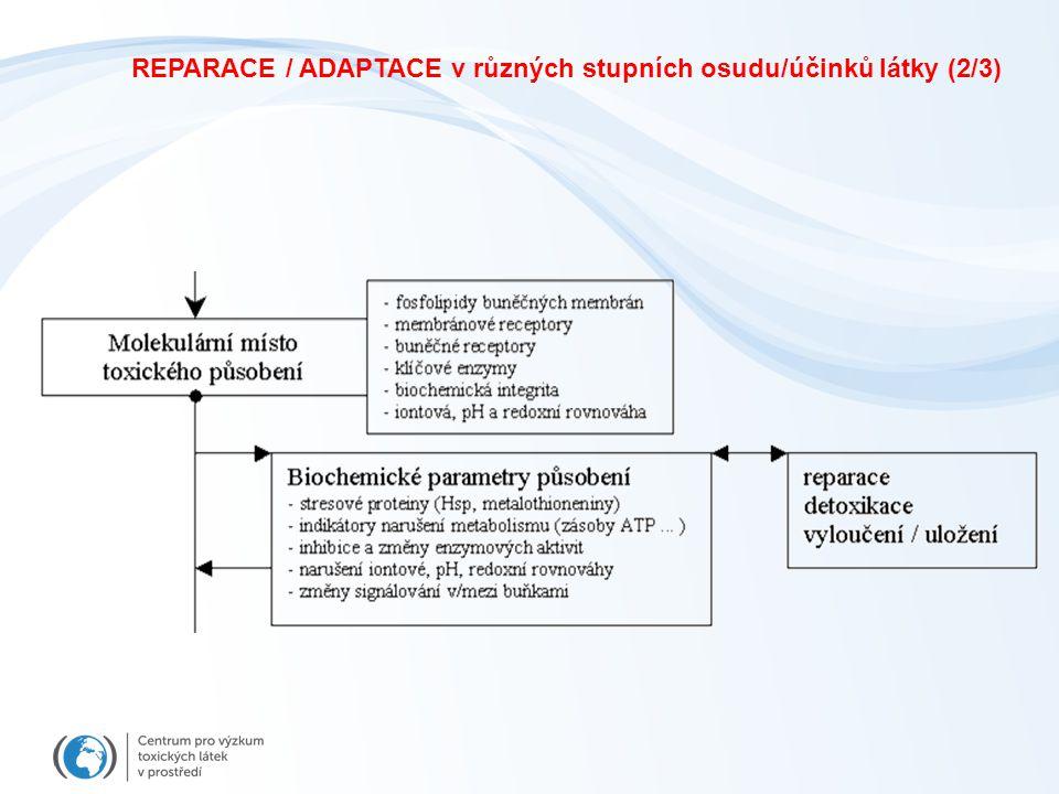 REPARACE / ADAPTACE v různých stupních osudu/účinků látky (2/3)