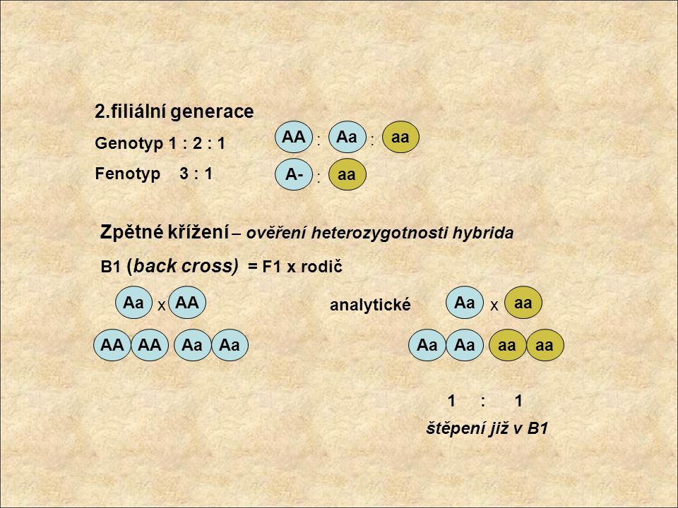 Zpětné křížení – ověření heterozygotnosti hybrida