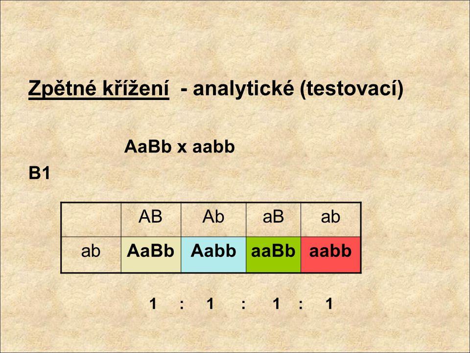 Zpětné křížení - analytické (testovací)