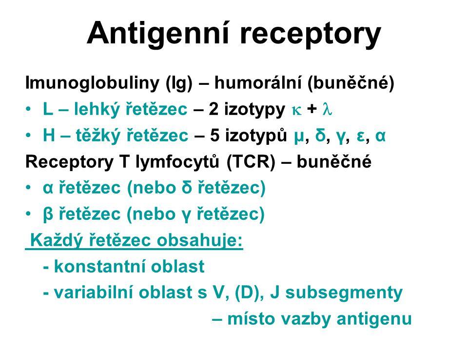 Antigenní receptory Imunoglobuliny (Ig) – humorální (buněčné)
