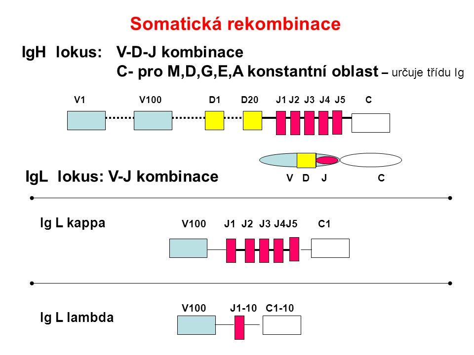 Somatická rekombinace