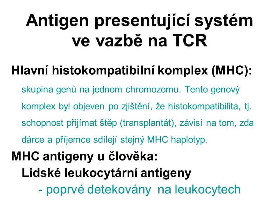 Antigen presentující systém ve vazbě na TCR