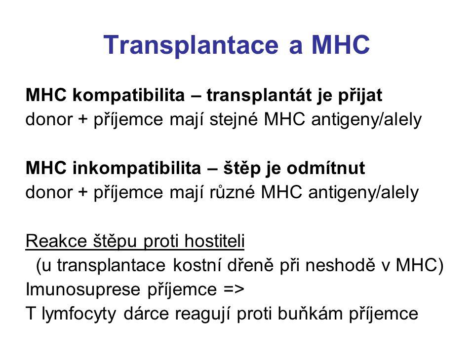 Transplantace a MHC MHC kompatibilita – transplantát je přijat
