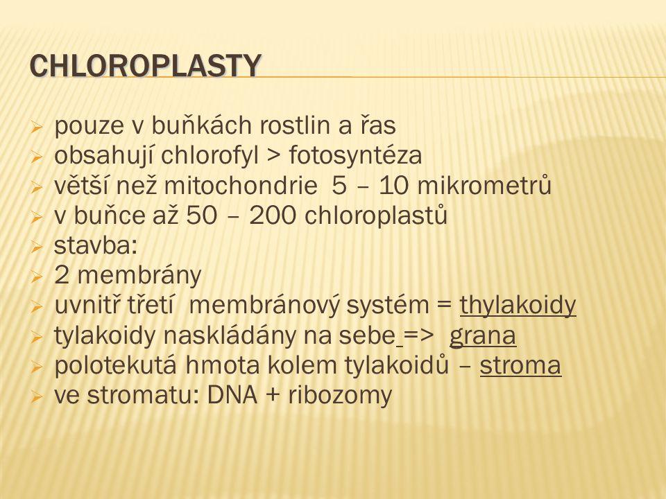chloroplasty pouze v buňkách rostlin a řas