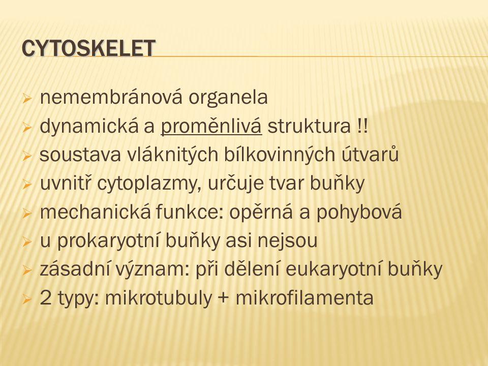CYTOSKELET nemembránová organela dynamická a proměnlivá struktura !!