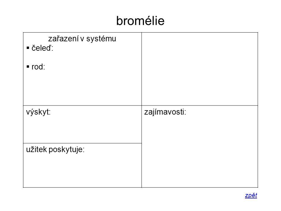 bromélie zařazení v systému čeleď: rod: výskyt: zajímavosti:
