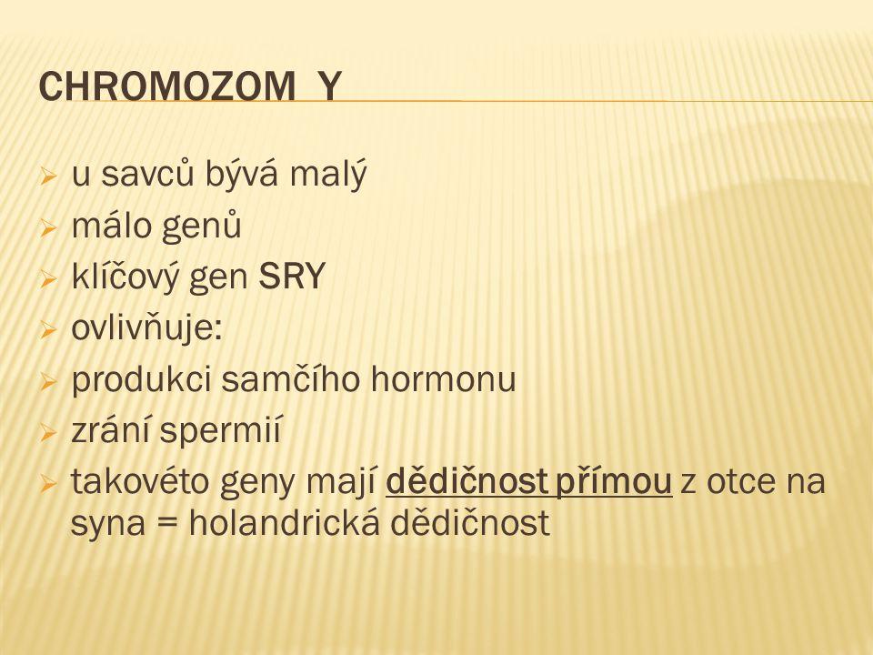 CHROMOZOM Y u savců bývá malý málo genů klíčový gen SRY ovlivňuje: