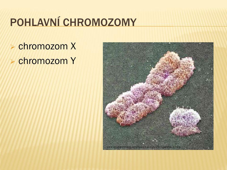 Pohlavní chromozomy chromozom X chromozom Y