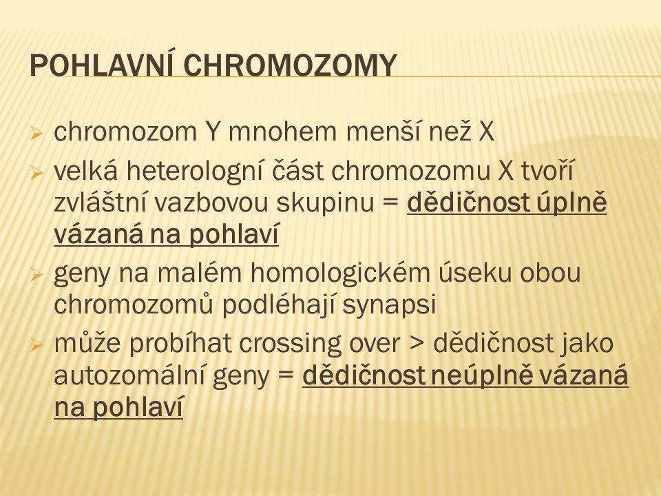 Pohlavní chromozomy chromozom Y mnohem menší než X