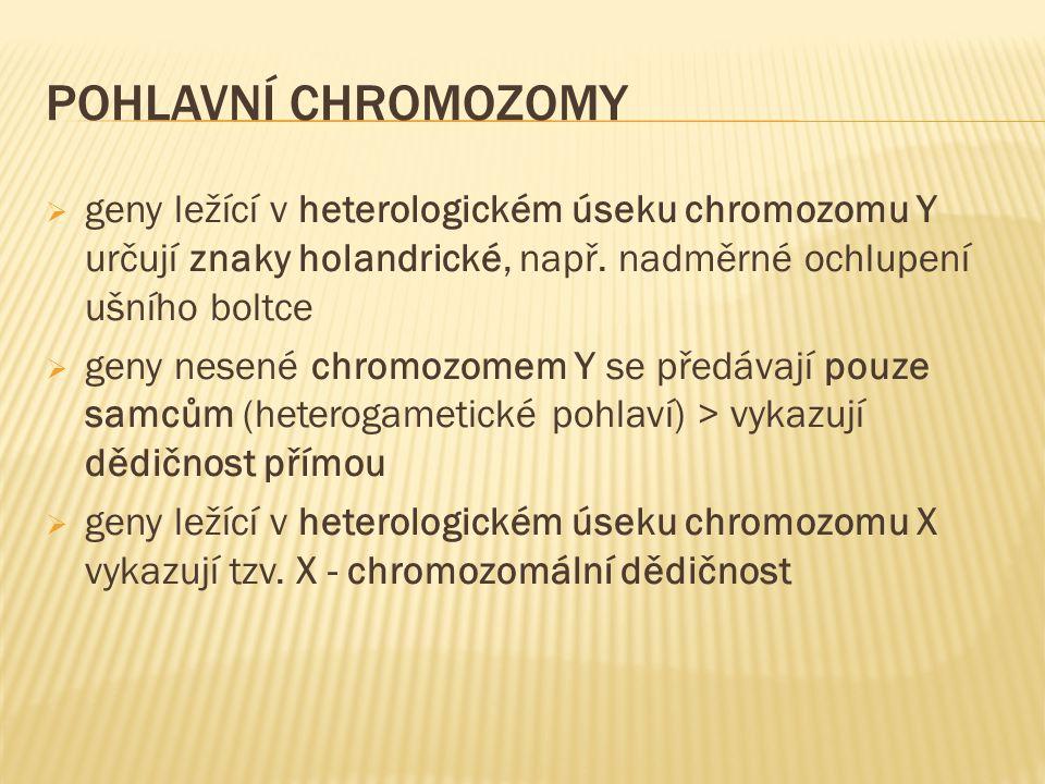 Pohlavní chromozomy geny ležící v heterologickém úseku chromozomu Y určují znaky holandrické, např. nadměrné ochlupení ušního boltce.