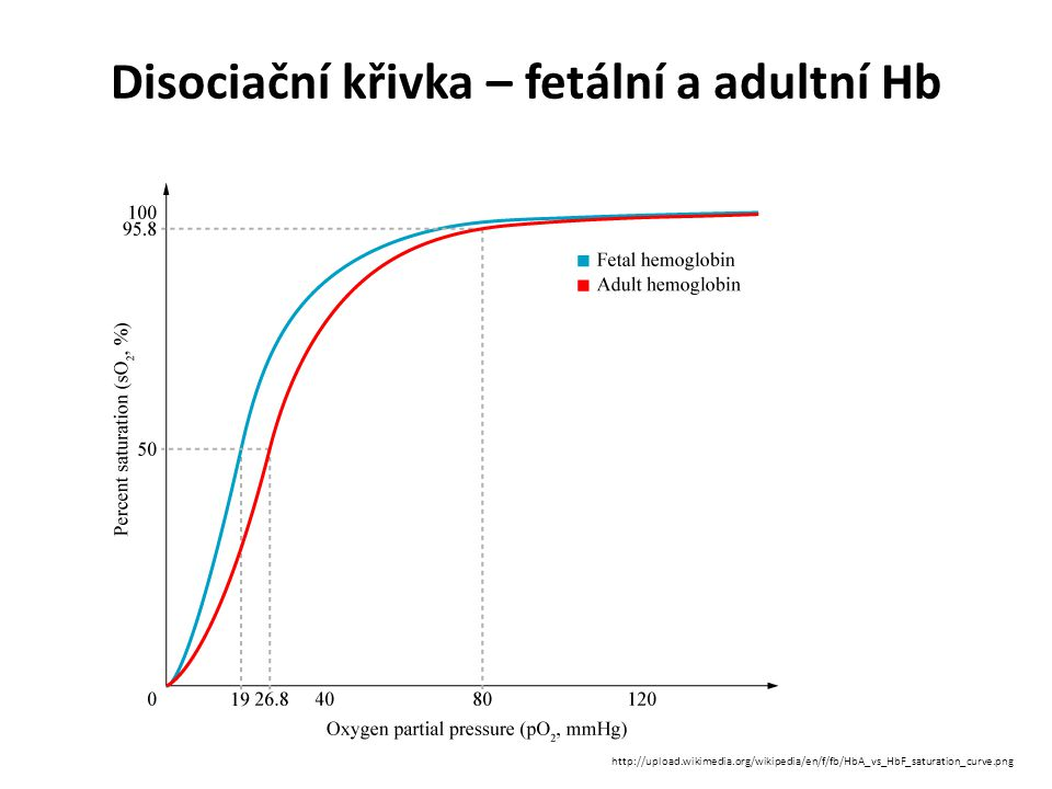 Disociační křivka – fetální a adultní Hb