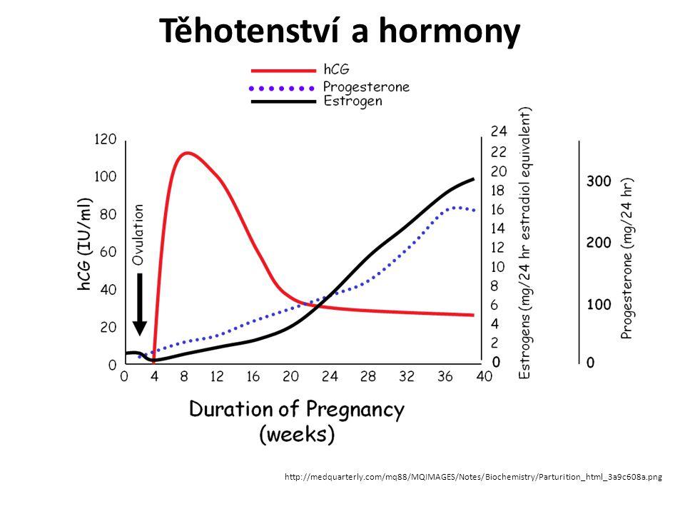 Těhotenství a hormony http://medquarterly.com/mq88/MQIMAGES/Notes/Biochemistry/Parturition_html_3a9c608a.png.