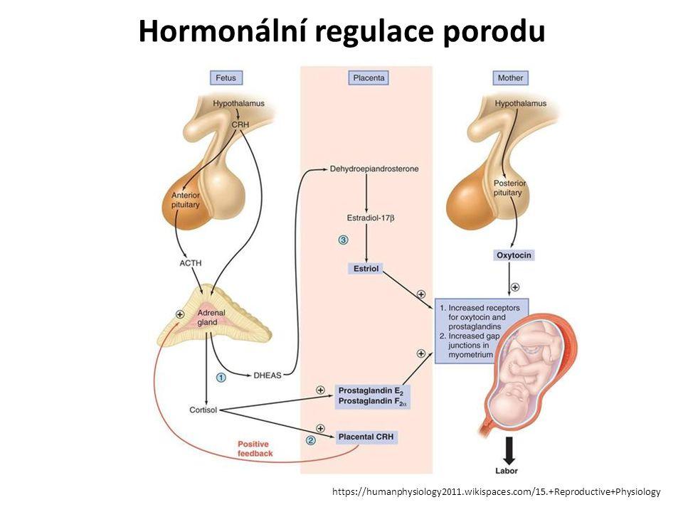 Hormonální regulace porodu