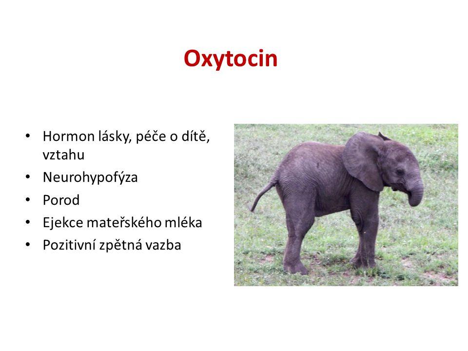 Oxytocin Hormon lásky, péče o dítě, vztahu Neurohypofýza Porod