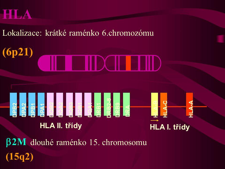 HLA (6p21) b2M: dlouhé raménko 15. chromosomu (15q2)