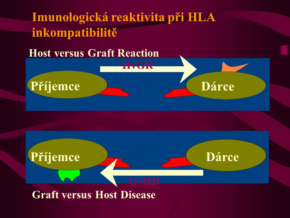Imunologická reaktivita při HLA inkompatibilitě
