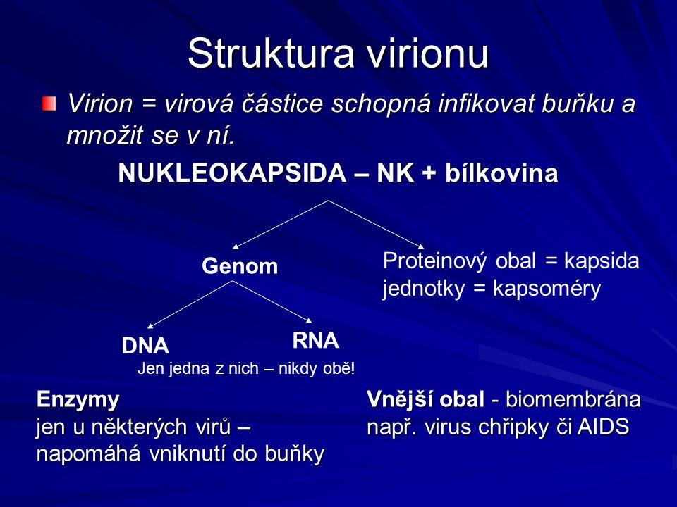NUKLEOKAPSIDA – NK + bílkovina