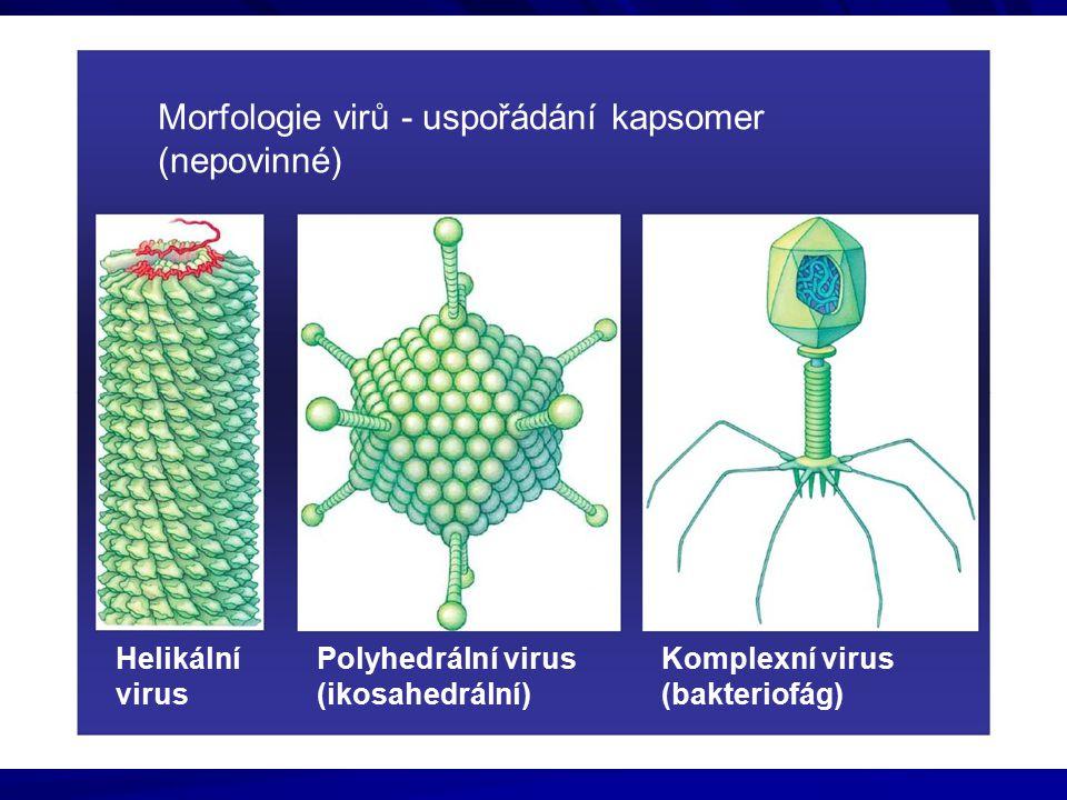 Morfologie virů - uspořádání kapsomer (nepovinné)