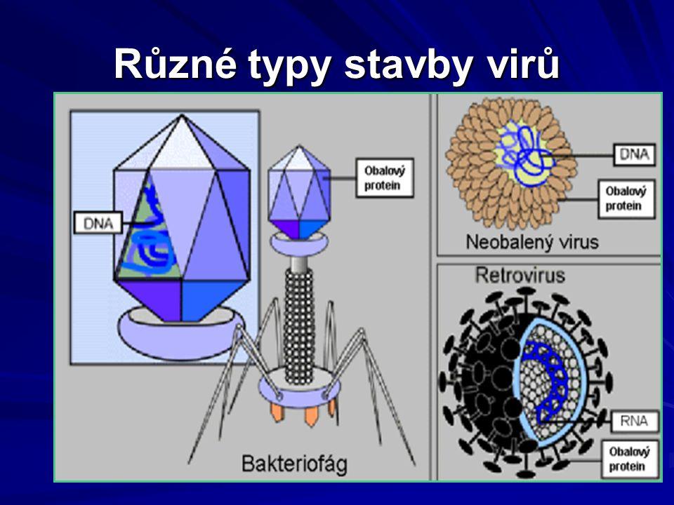 Různé typy stavby virů
