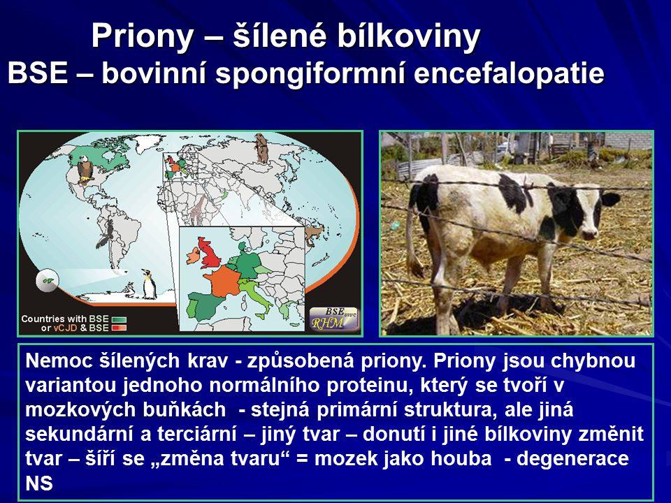 Priony – šílené bílkoviny BSE – bovinní spongiformní encefalopatie