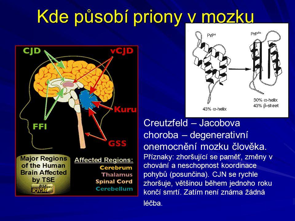 Kde působí priony v mozku