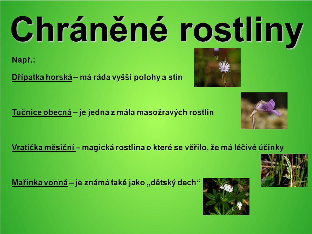 Chráněné rostliny Např.: Dřípatka horská – má ráda vyšší polohy a stín