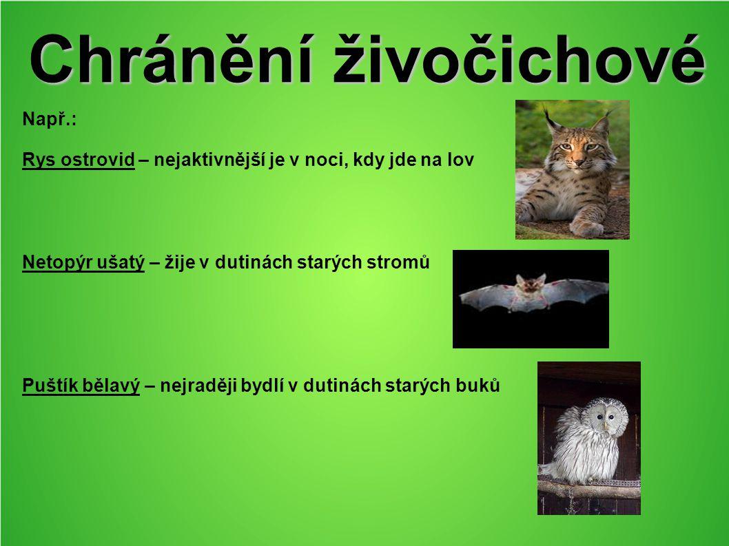 Chránění živočichové Např.: