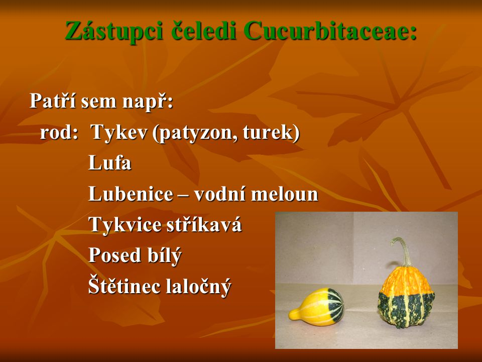 Zástupci čeledi Cucurbitaceae: