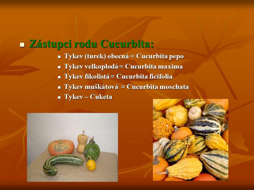 Zástupci rodu Cucurbita: