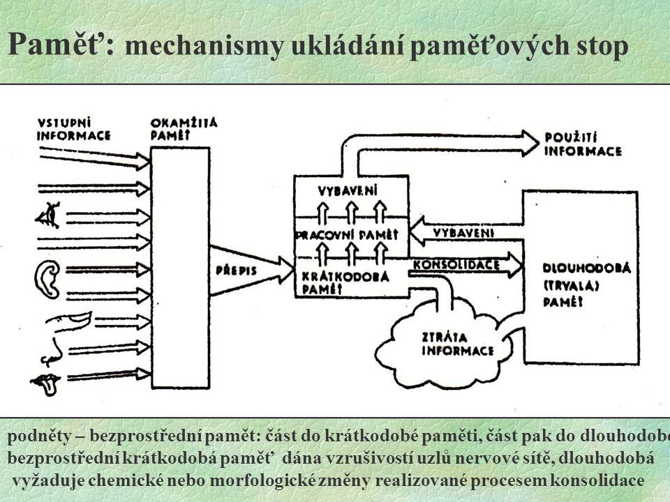 Paměť: mechanismy ukládání paměťových stop