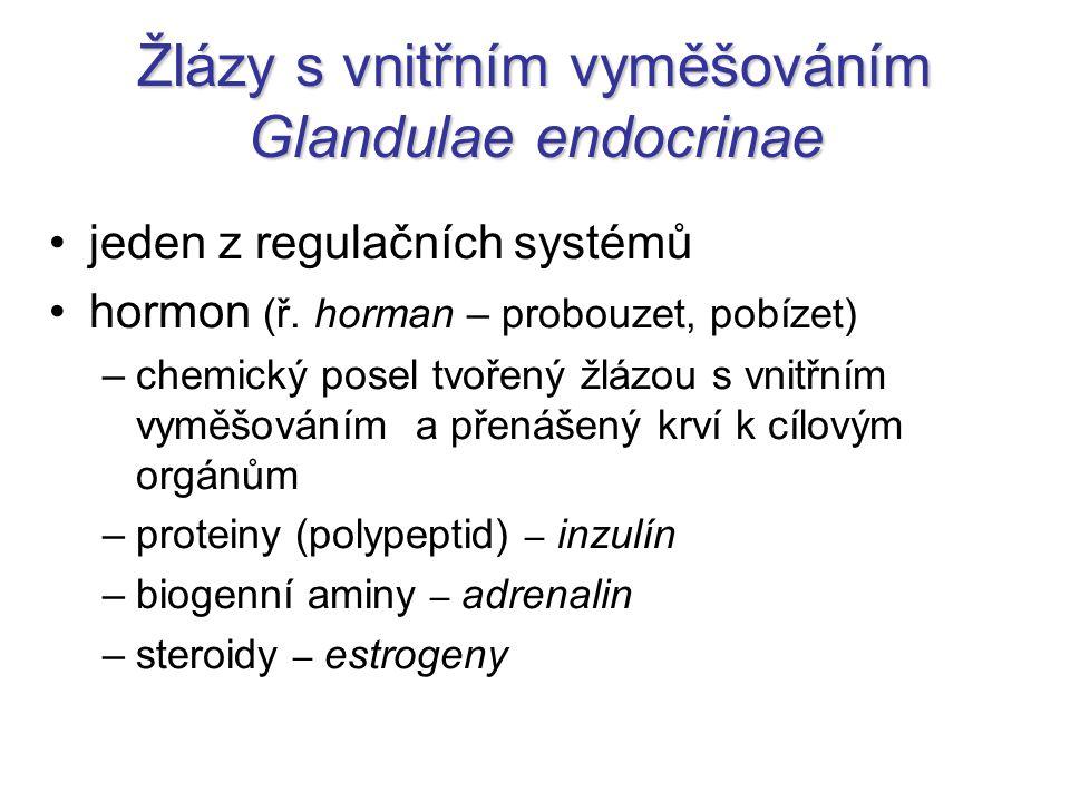 Žlázy s vnitřním vyměšováním Glandulae endocrinae