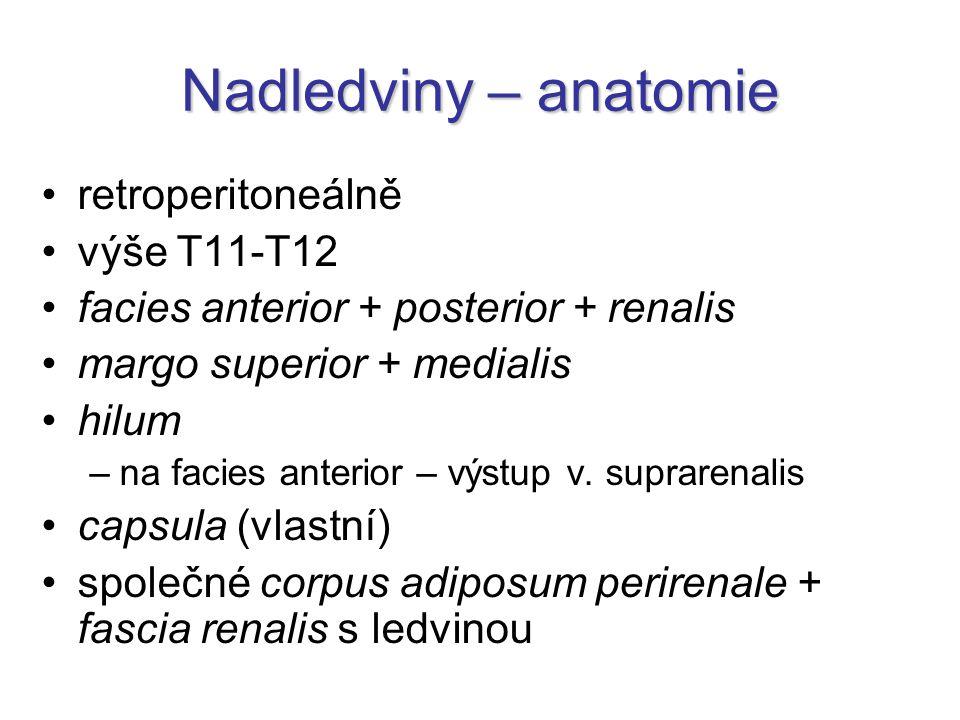 Nadledviny – anatomie retroperitoneálně výše T11-T12