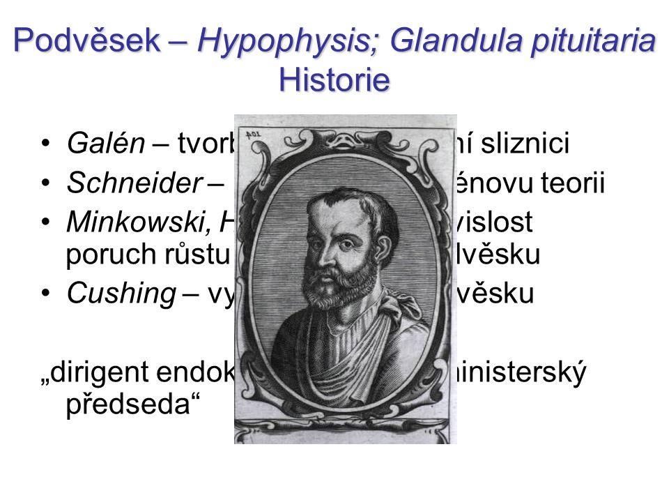Podvěsek – Hypophysis; Glandula pituitaria Historie
