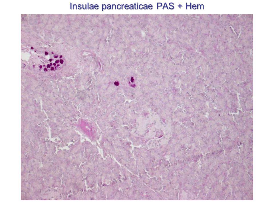 Insulae pancreaticae PAS + Hem