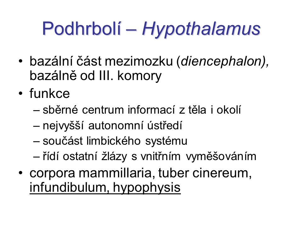 Podhrbolí – Hypothalamus