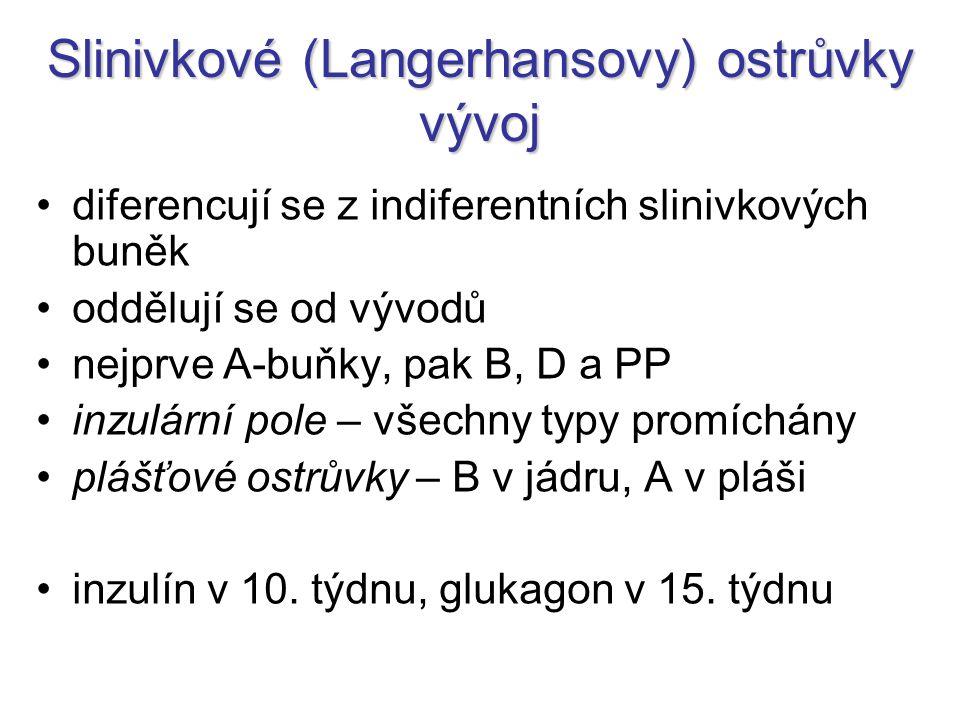 Slinivkové (Langerhansovy) ostrůvky vývoj