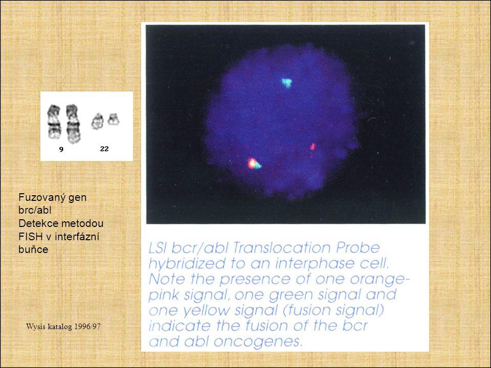 Detekce metodou FISH v interfázní buňce