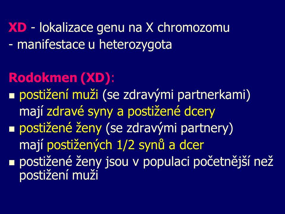 XD - lokalizace genu na X chromozomu