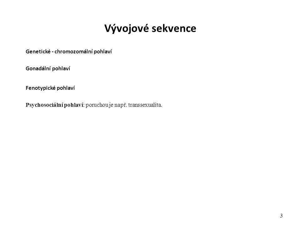 Vývojové sekvence Genetické - chromozomální pohlaví Gonadální pohlaví