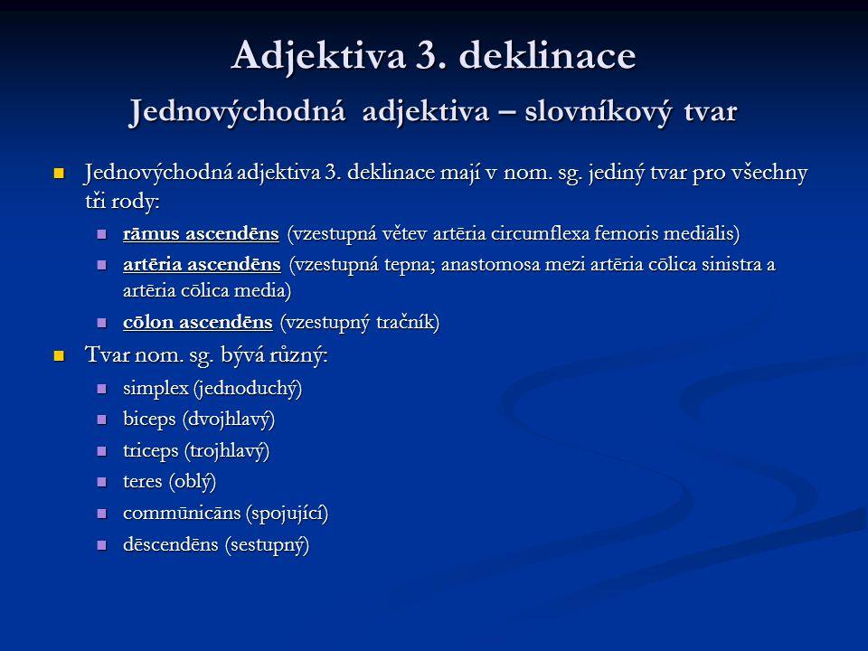 Adjektiva 3. deklinace Jednovýchodná adjektiva – slovníkový tvar