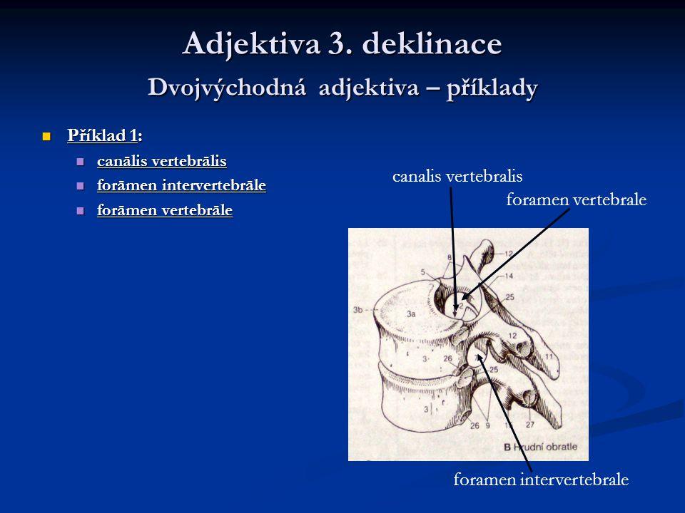 Adjektiva 3. deklinace Dvojvýchodná adjektiva – příklady