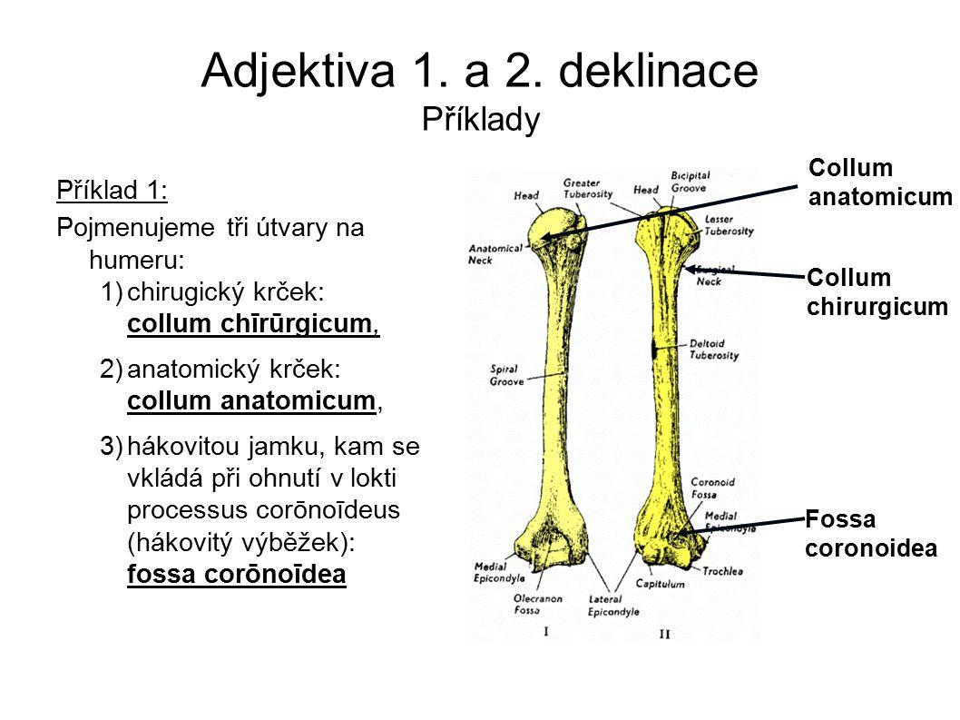 Adjektiva 1. a 2. deklinace Příklady