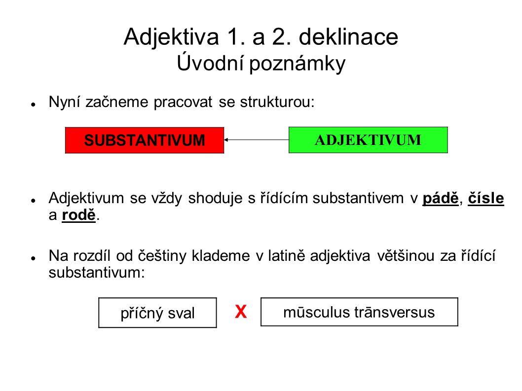 Adjektiva 1. a 2. deklinace Úvodní poznámky