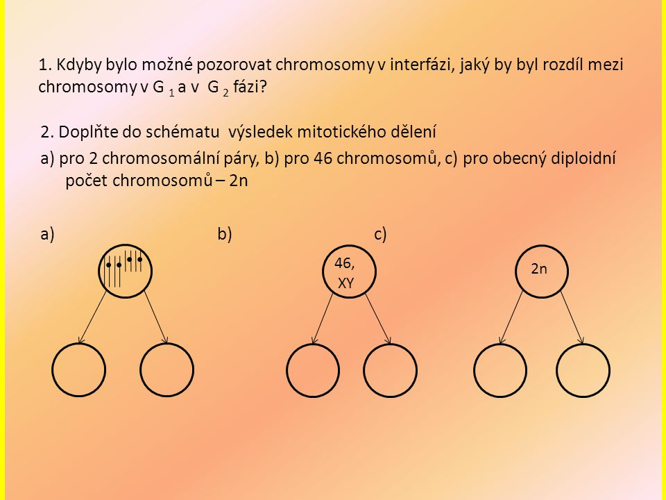 1. Kdyby bylo možné pozorovat chromosomy v interfázi, jaký by byl rozdíl mezi chromosomy v G 1 a v G 2 fázi