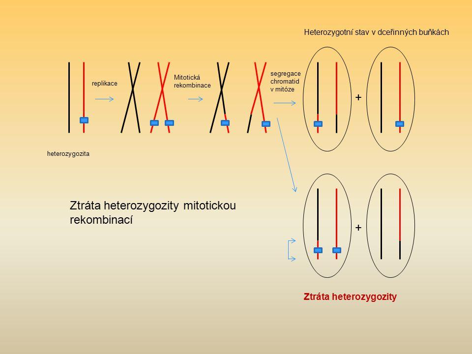 Ztráta heterozygozity mitotickou rekombinací