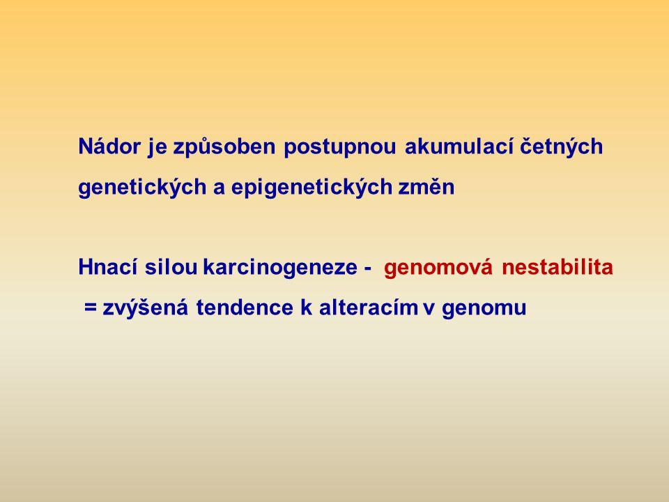 Nádor je způsoben postupnou akumulací četných genetických a epigenetických změn