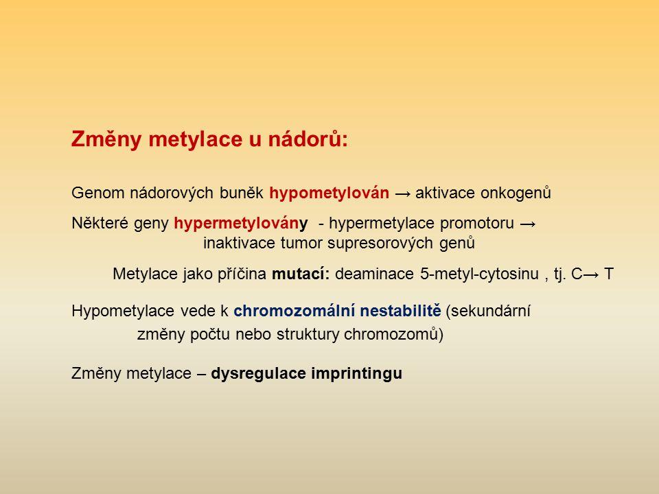 Změny metylace u nádorů: